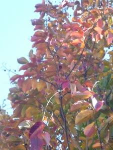November flowers 019