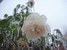 ice days 053