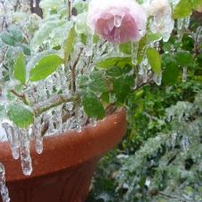 ice days 061